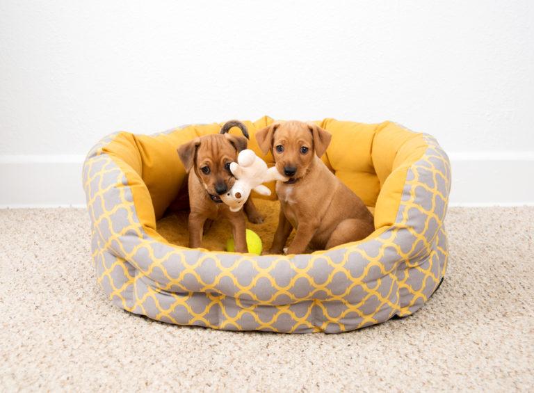 Csinálj magad (DIY) kutyafekhelyet házilag, cuki kisállataidnak