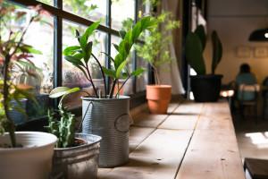 Tedd otthonosabbá a lakásodat ezekkel a növényekkel!
