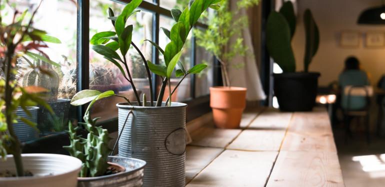 Otthonosabb lakás növényekkel
