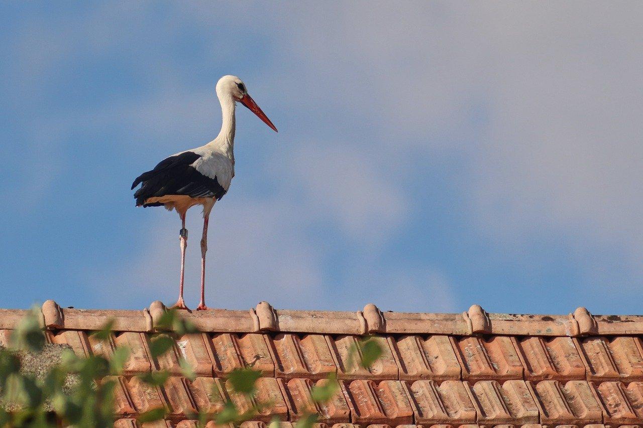 tetőfedés provident