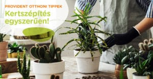 Beltéri növény guide kezdőknek