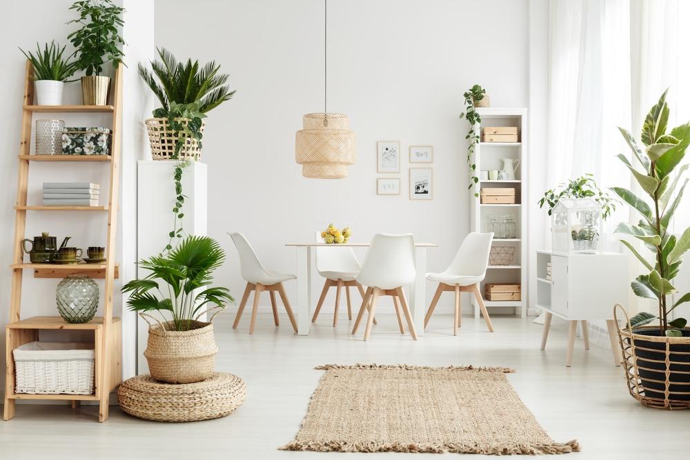 Szobanövények a lakásban