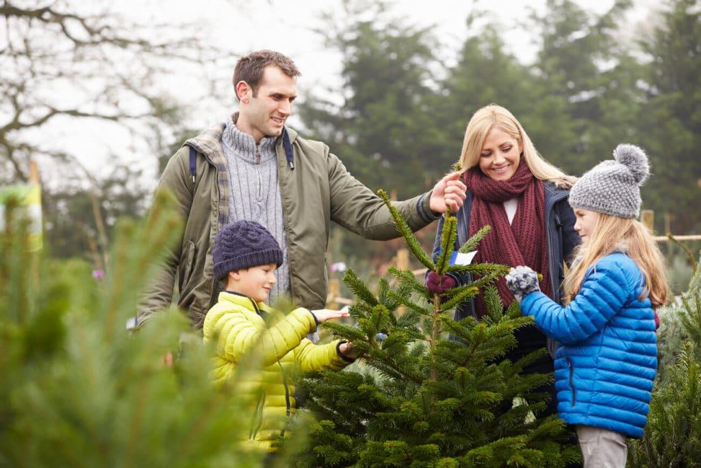 Karácsonyfa választás a családdal