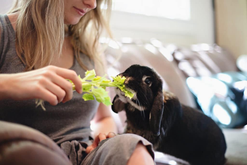 Felelős állattartás, nyuszi etetés