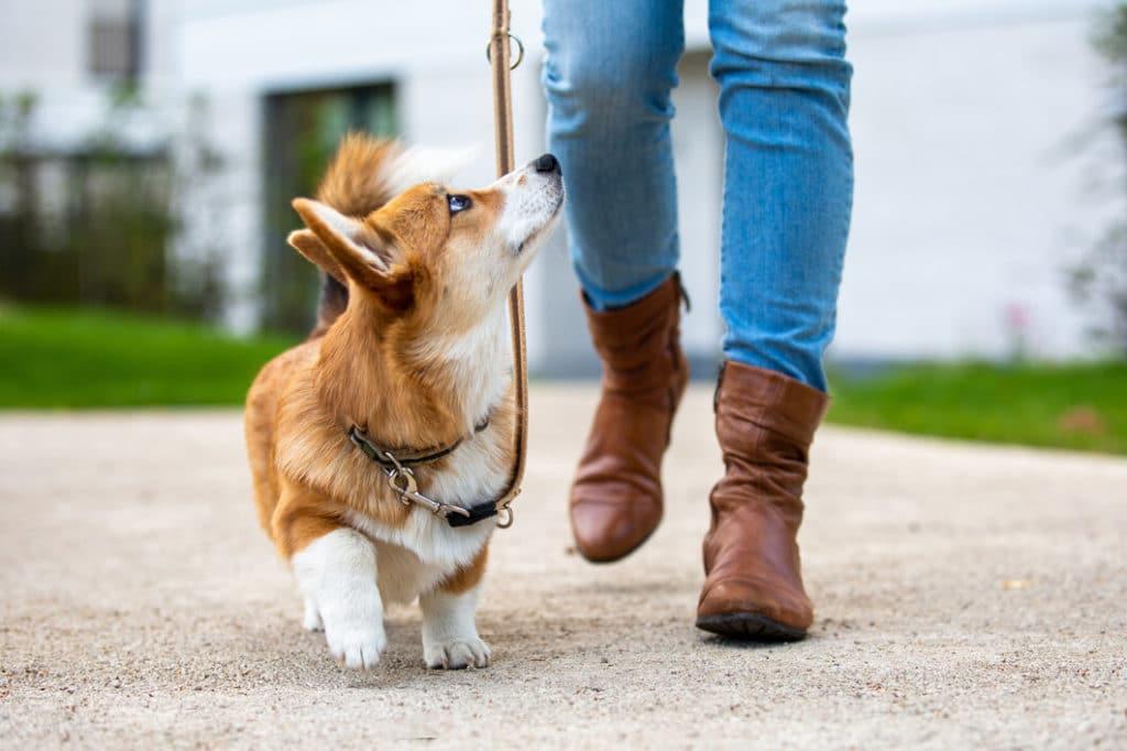 Felelős állattartás, kutya sétáltatás