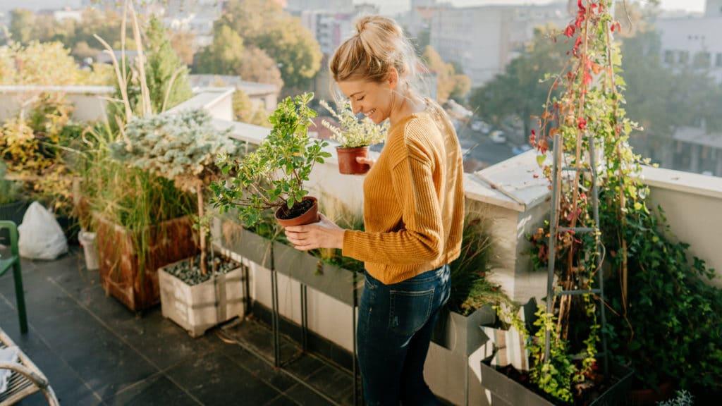 Zöld terasz növényekkel