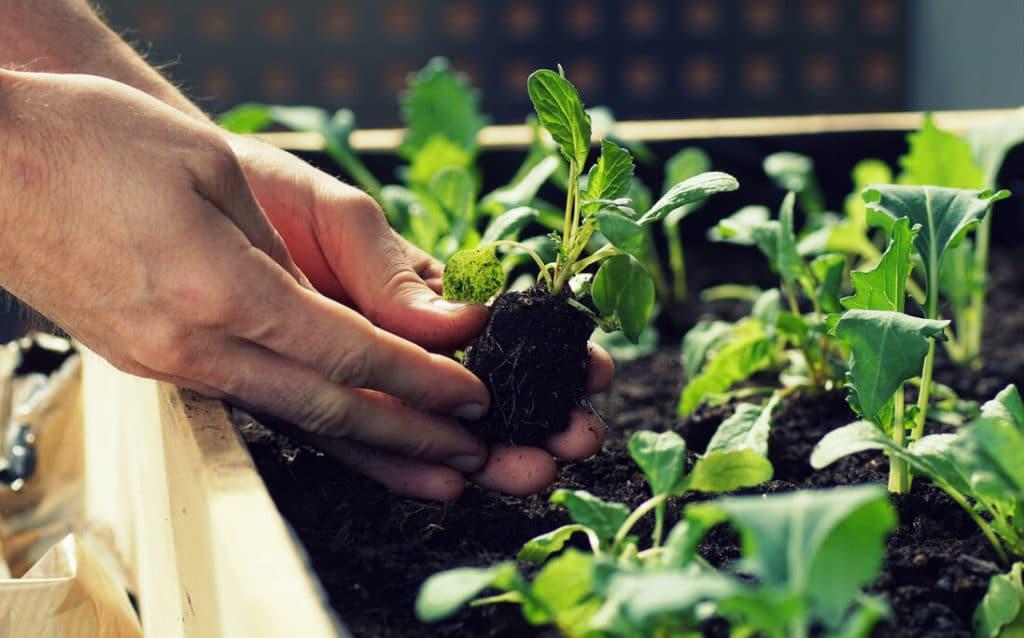 Itt az ideje a palánták ültetésének