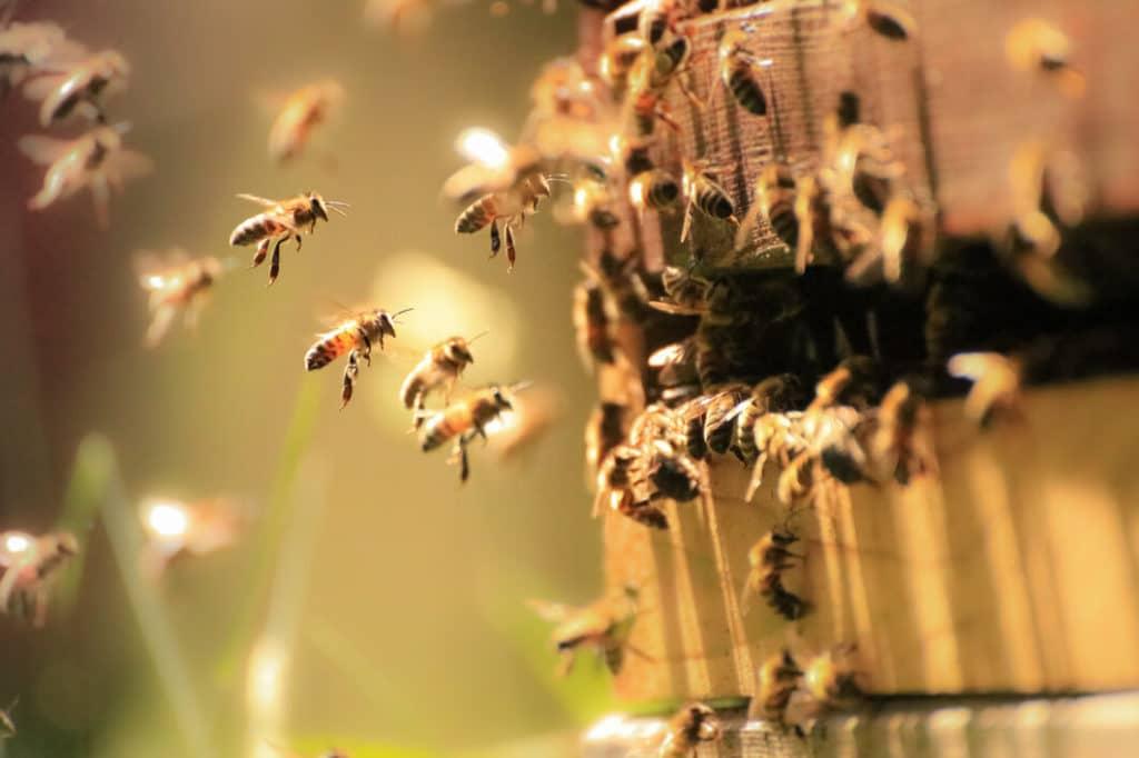 Csatlakozz a mozgalomhoz és védd a méheket!