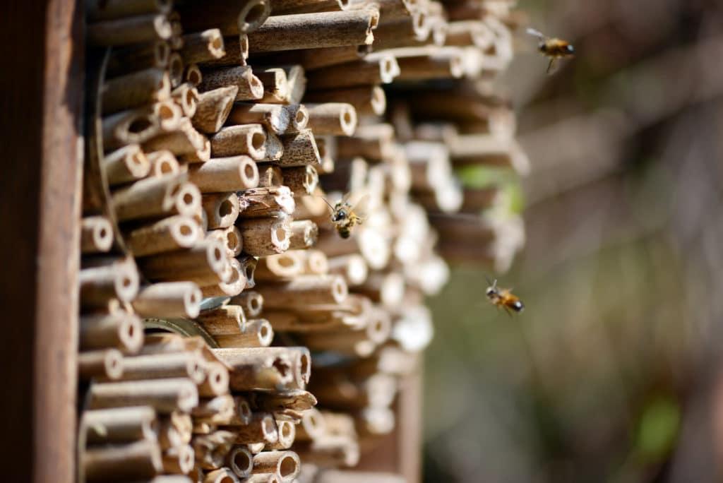 Otthon a méheknek